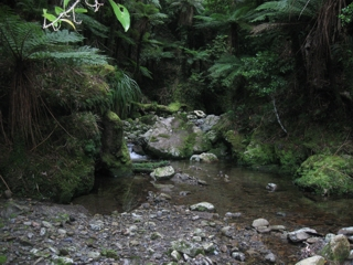 The beautiful Whakanui Stream in the Rimutaka Forest Park is home to many species of native freshwater fish
