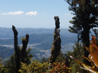 View of Wainuiomata taken from the Rimutaka Forest Park